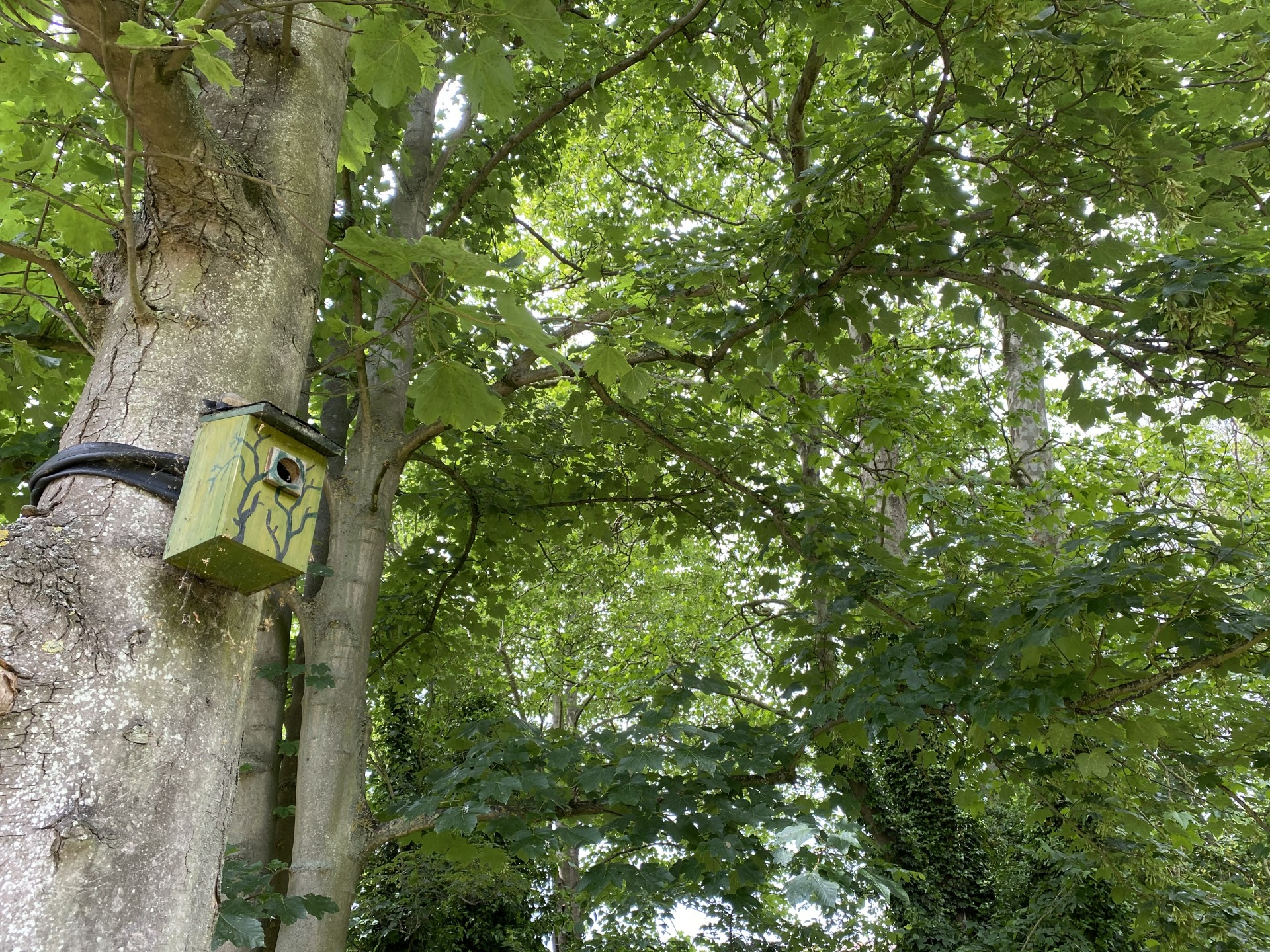 Bird boxes in trees.