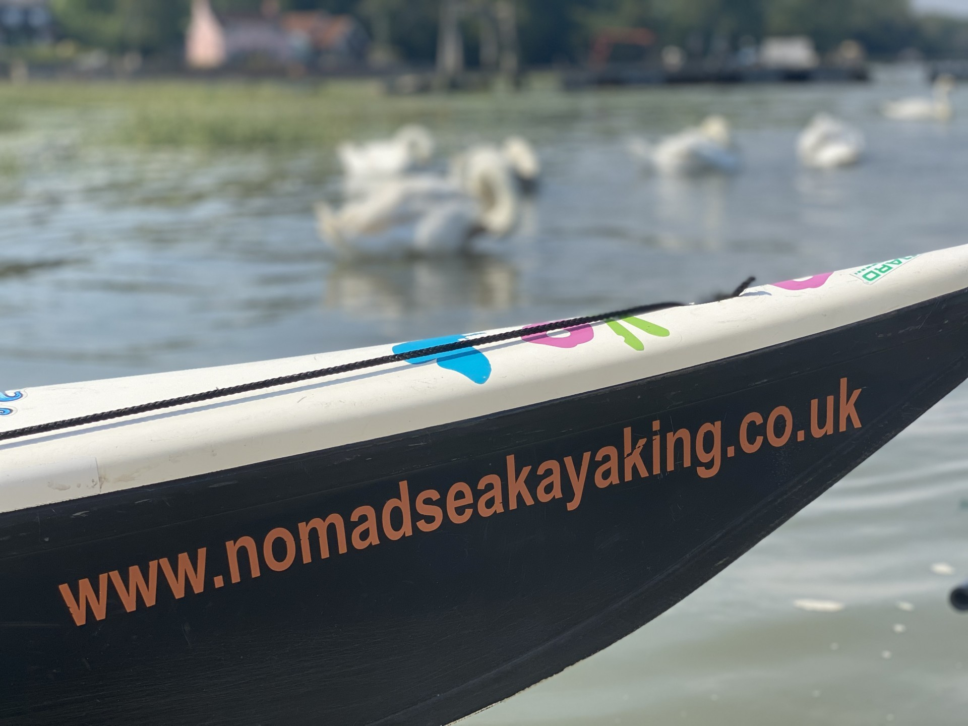 /storage/Sea kayak with swans in the background