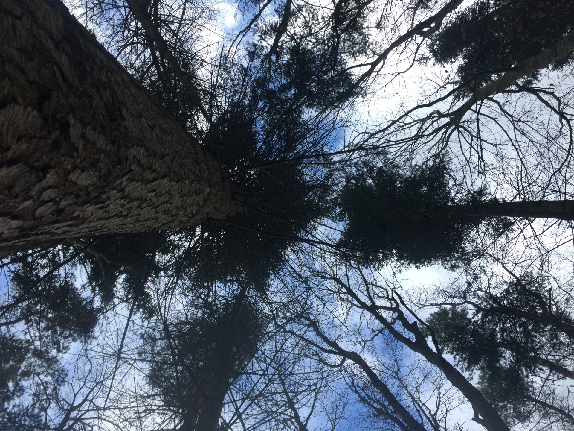 /storage/Looking up towards the tree canopy against a blue sky.