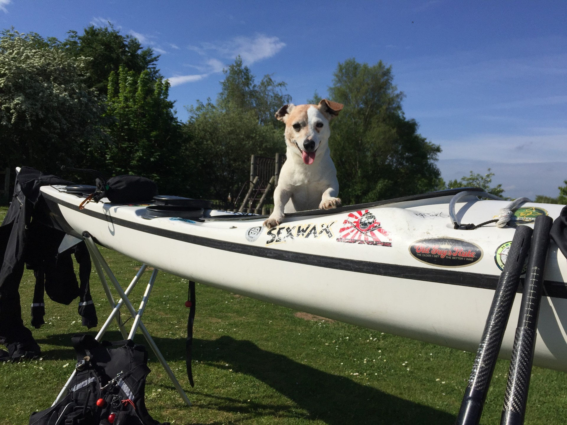A small cute Jack Russell dog sitting in a white sea kayak
