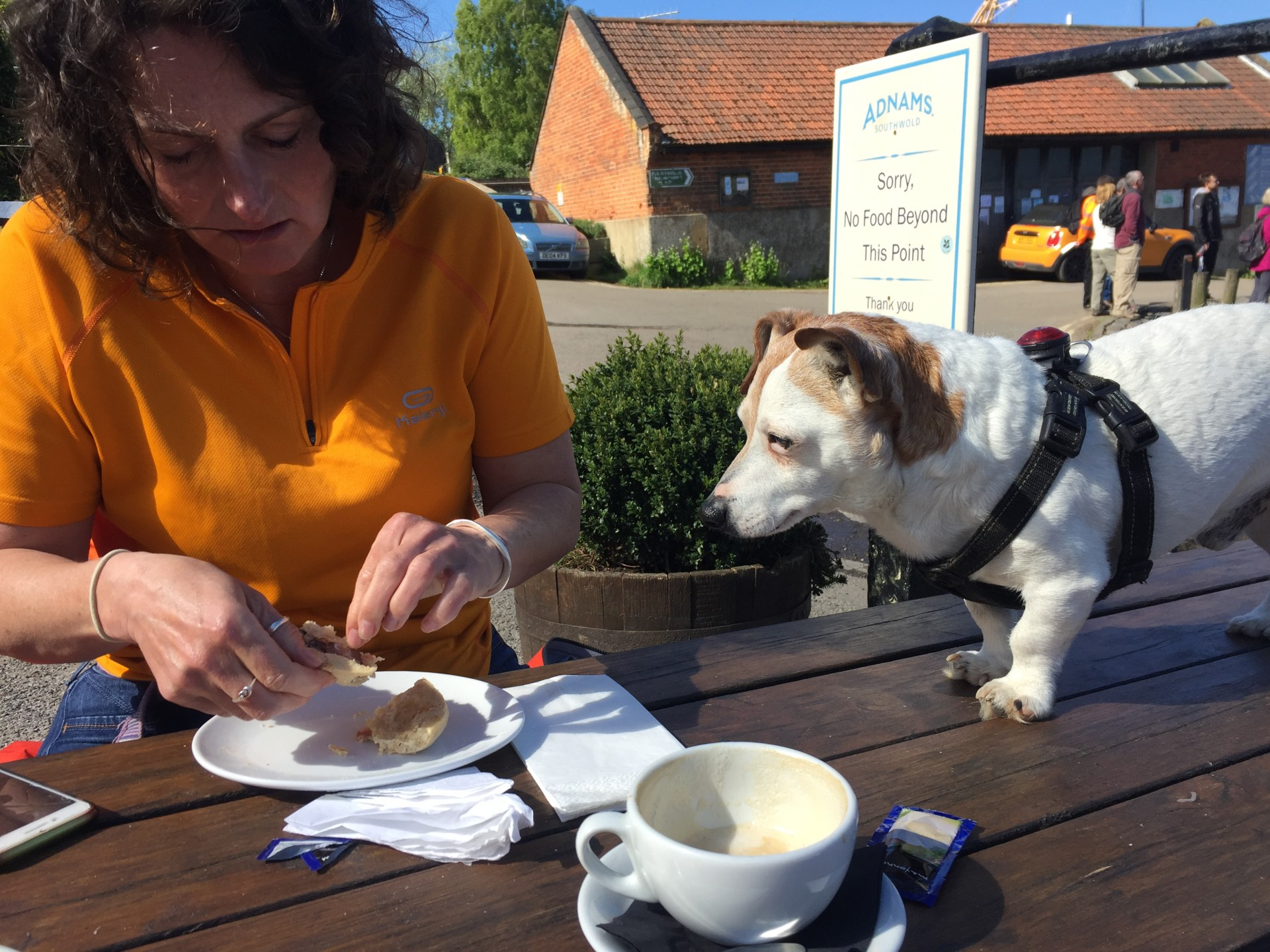 /storage/Short Jack Russell standing on a table staring hard at a plate of food being eaten by a sea kayaking guide after a trip.