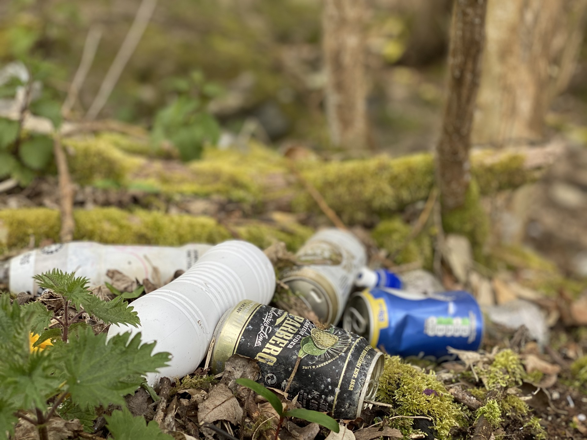 White plastic and tins on a forest floor.