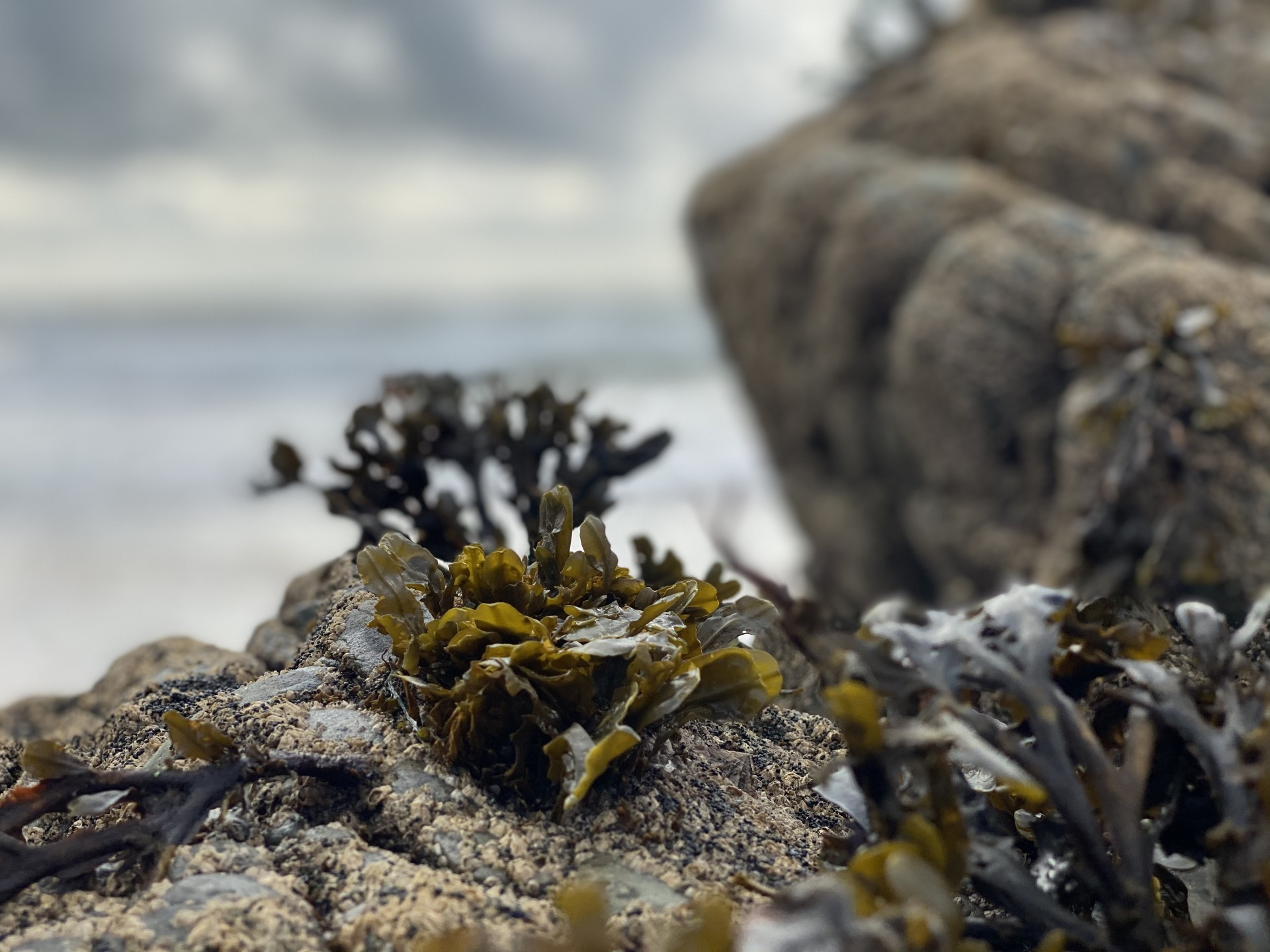 Seaweed clinging to a rock