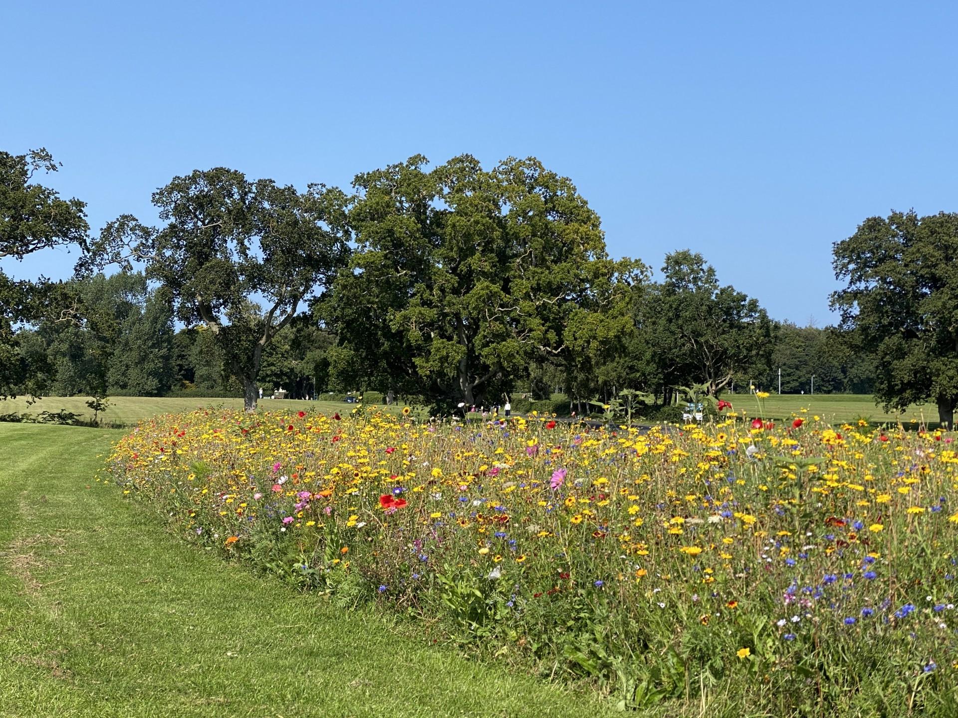 Pollinator Wildflower Meadow